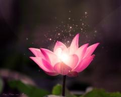 Lotus Beauty Whitianga join our Brazillian Wax Club!